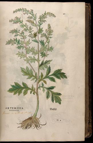 Image of Fuchs-1542-044