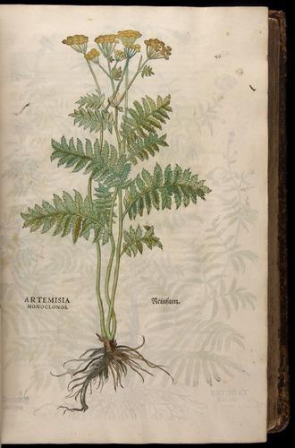Image of Fuchs-1542-046