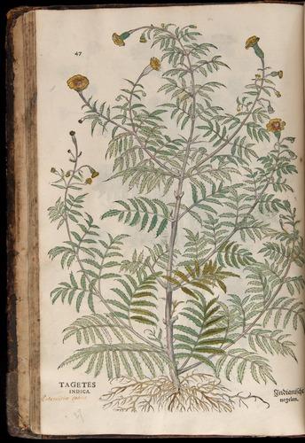 Image of Fuchs-1542-047