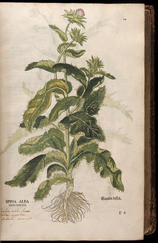 Image of Fuchs-1542-056