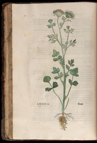 Image of Fuchs-1542-062