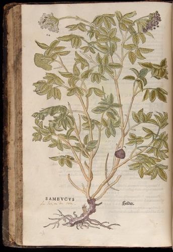 Image of Fuchs-1542-064