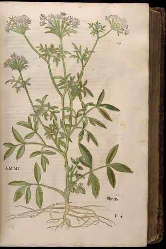 Image of Fuchs-1542-067