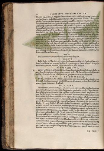 Image of Fuchs-1542-070