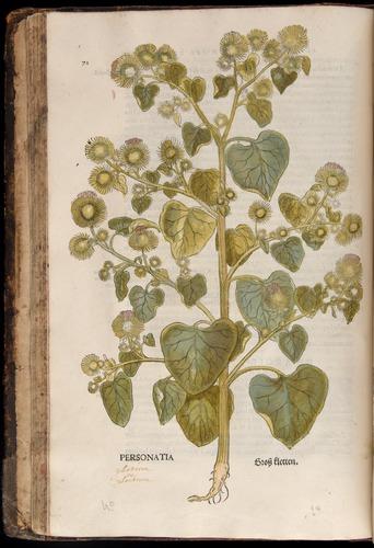 Image of Fuchs-1542-072