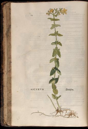 Image of Fuchs-1542-074