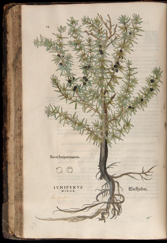 Image of Fuchs-1542-078