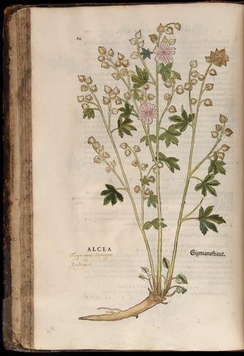 Image of Fuchs-1542-080