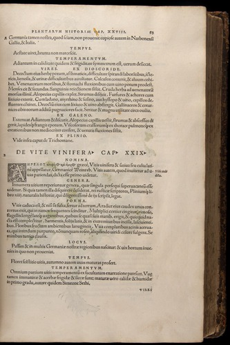 Image of Fuchs-1542-083
