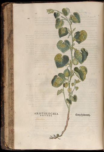 Image of Fuchs-1542-090