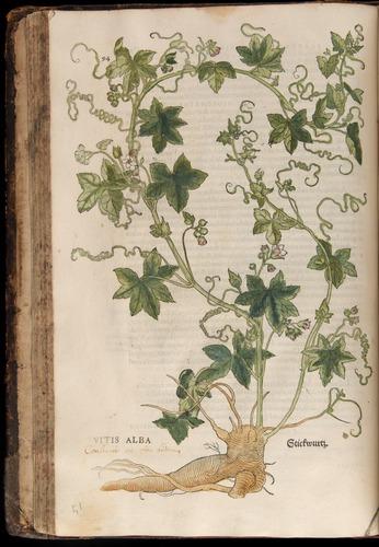 Image of Fuchs-1542-094