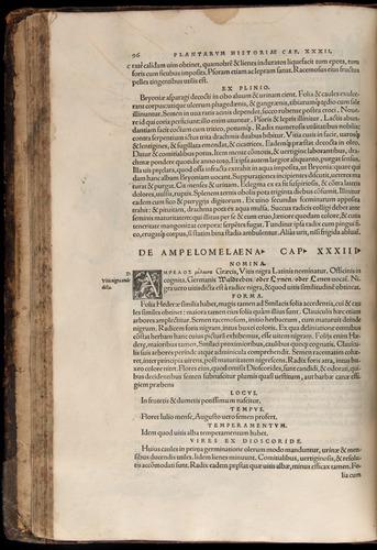 Image of Fuchs-1542-096