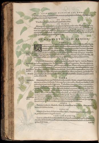 Image of Fuchs-1542-098