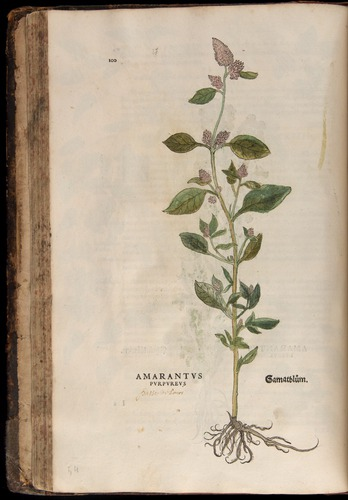 Image of Fuchs-1542-100