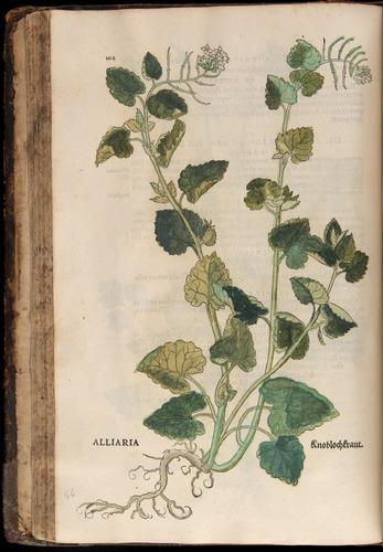 Image of Fuchs-1542-104