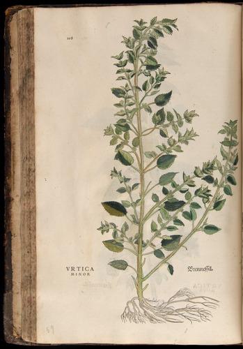 Image of Fuchs-1542-108