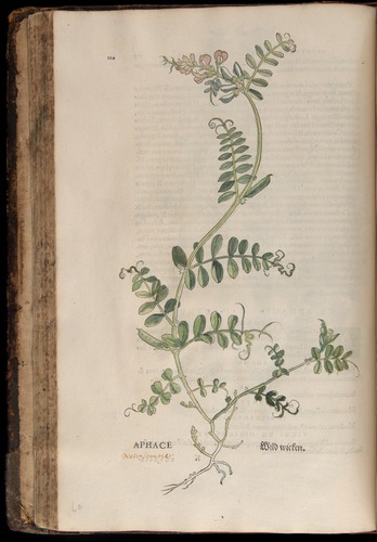Image of Fuchs-1542-110