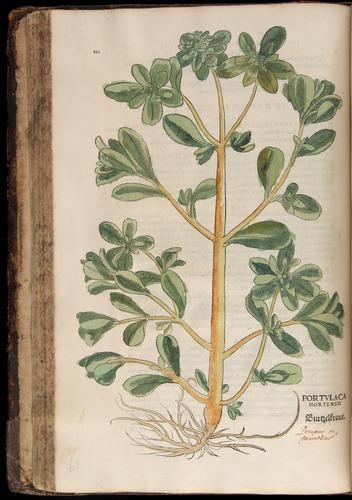 Image of Fuchs-1542-112