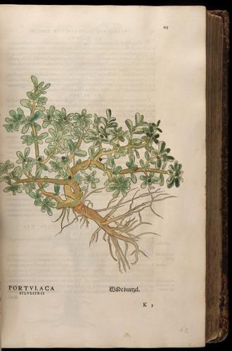 Image of Fuchs-1542-113