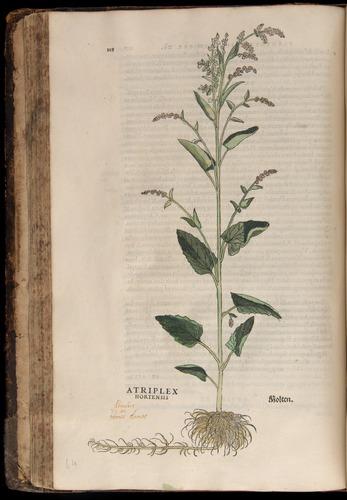 Image of Fuchs-1542-118
