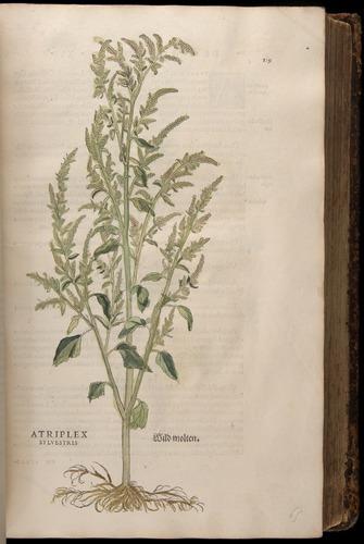 Image of Fuchs-1542-119