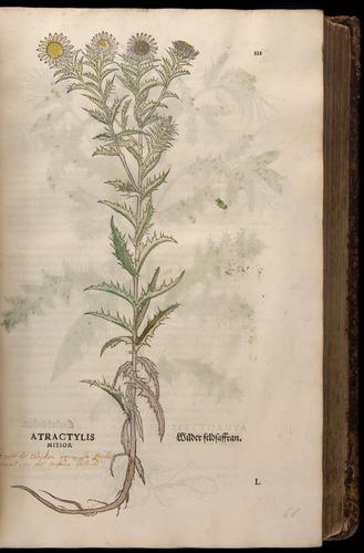 Image of Fuchs-1542-121