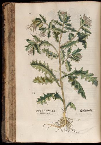 Image of Fuchs-1542-122
