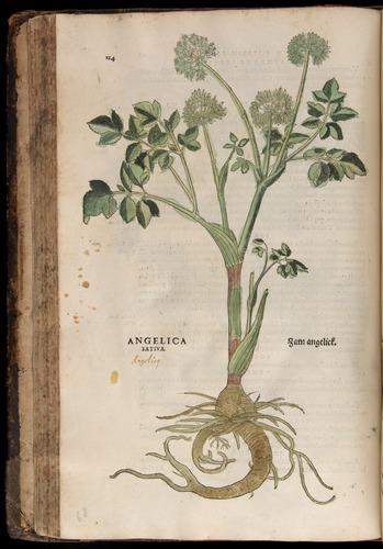 Image of Fuchs-1542-124