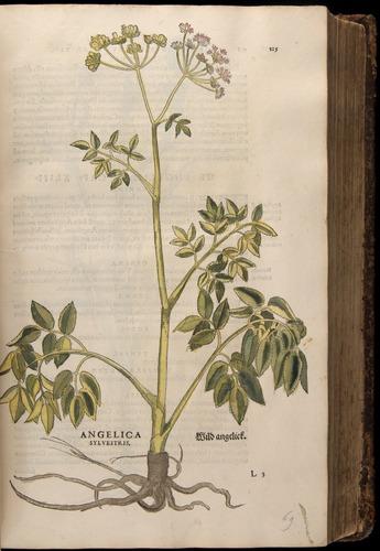 Image of Fuchs-1542-125