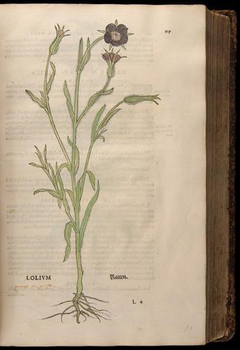 Image of Fuchs-1542-127