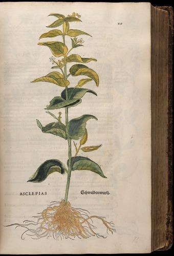 Image of Fuchs-1542-129
