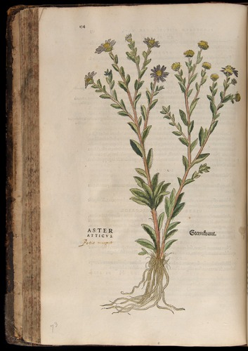 Image of Fuchs-1542-134