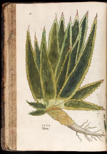 Image of Fuchs-1542-138