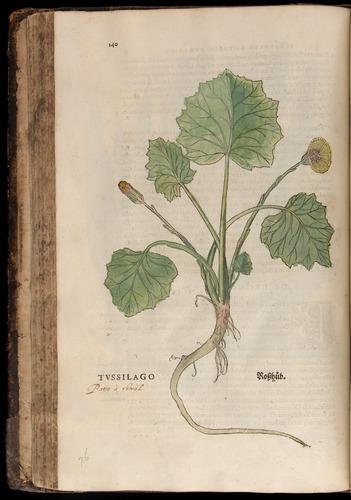 Image of Fuchs-1542-140