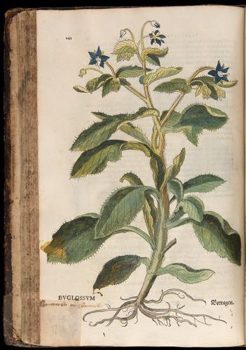 Image of Fuchs-1542-142