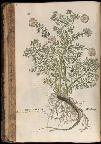 Image of Fuchs-1542-144