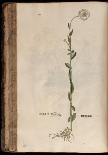 Image of Fuchs-1542-148