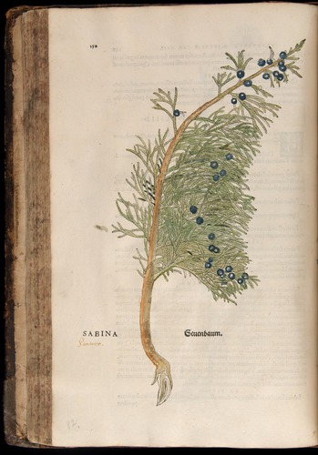 Image of Fuchs-1542-150