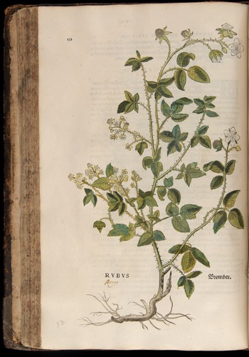 Image of Fuchs-1542-152