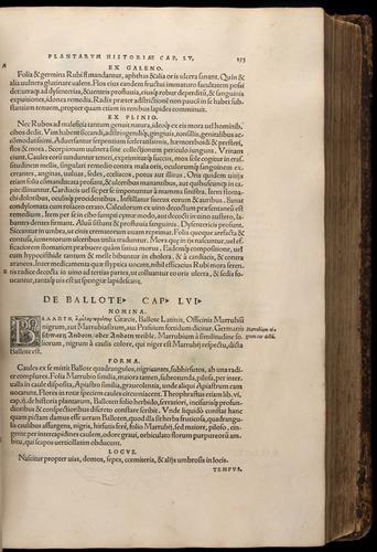 Image of Fuchs-1542-153