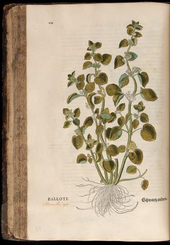 Image of Fuchs-1542-154