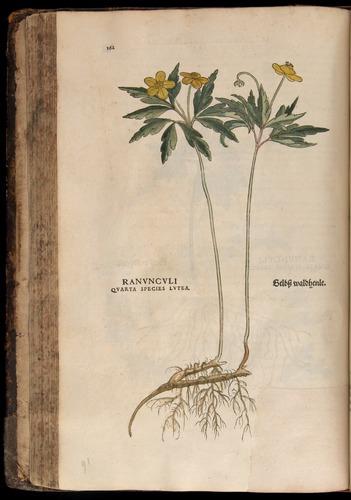 Image of Fuchs-1542-162