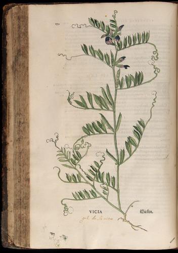 Image of Fuchs-1542-172