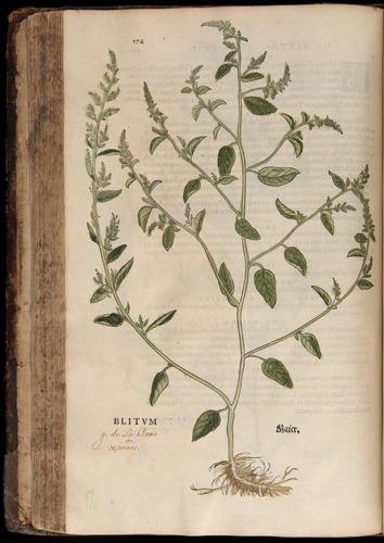 Image of Fuchs-1542-174