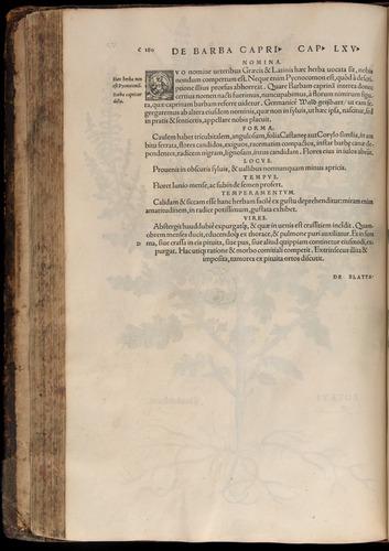 Image of Fuchs-1542-180