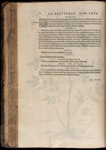 Image of Fuchs-1542-182
