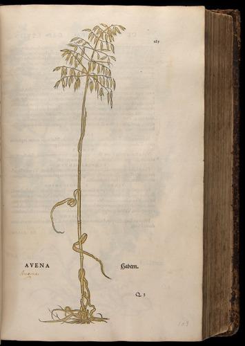Image of Fuchs-1542-185