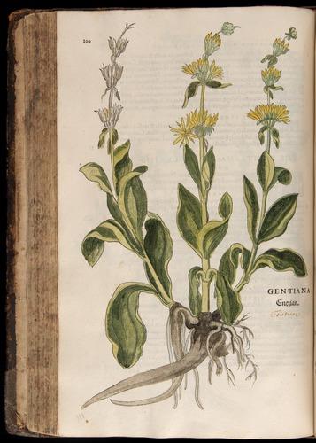 Image of Fuchs-1542-200