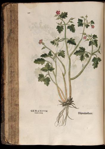 Image of Fuchs-1542-206