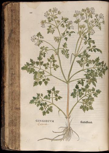 Image of Fuchs-1542-216